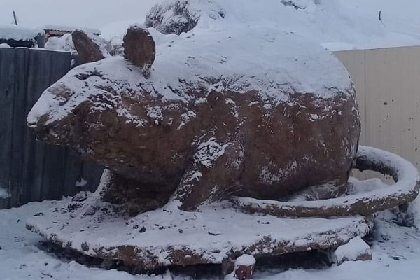 В России мужчина слепил гигантскую крысу из навоза: фотофакт