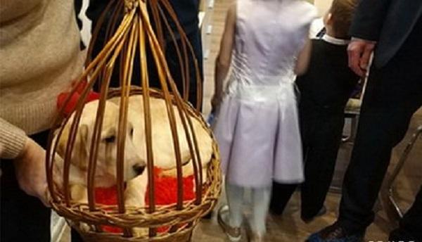 Российская школьница получила в подарок от Путина щенка ретривера
