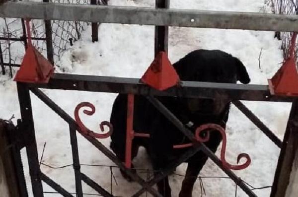 Под Харьковом пес загрыз 4-летнего ребенка: фото с места ЧП
