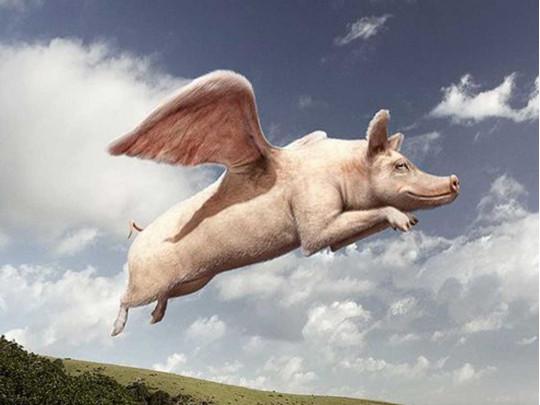Летающие кабаны: в Испании стадо диких свиней устроило прыжки с крыши фабрики