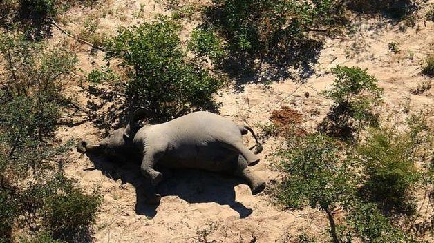 Больше трёх сотен слонов один за другим погибли по неизвестной причине у водопоя в Африке