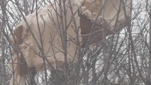 В Киеве из окна многоэтажки выбросили диван. Он застрял на дереве и висит там 10 дней