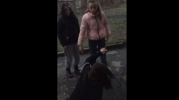 Поставили на колени и избили: в Кривом Роге школьницы издевались над сверстницей – видео 18+
