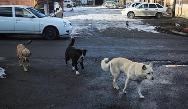 Собаки 100 раз покусали девятилетнюю россиянку