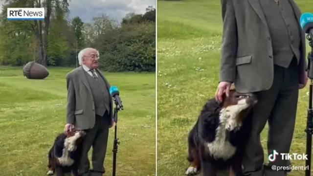 Собака президента Ирландии пыталась привлечь его внимание во время выступления