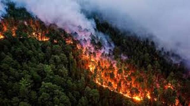 Пожары в России: огнем охвачено свыше миллиона гектаров