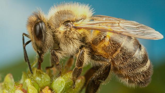 65 000 евро за убийство пчелы