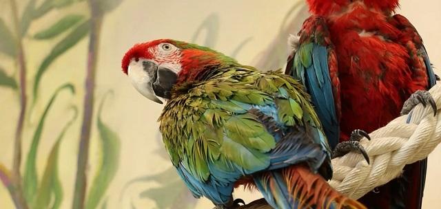 Из Харьковского горсовета выселили попугая Кернеса