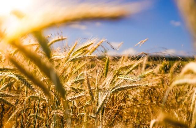Директор базы Госрезерва пытался украсть зерна на ₴12 миллионов