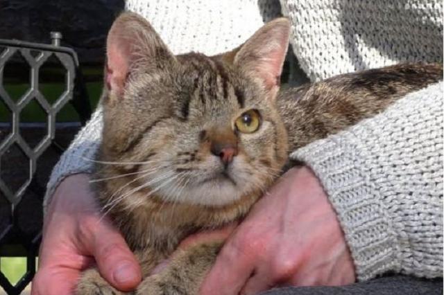Удалили глаз и матку: на Полтавщине живодер насиловал котенка