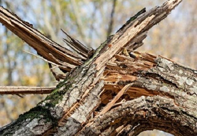 Во Львове парень и девушка погибли во время урагана