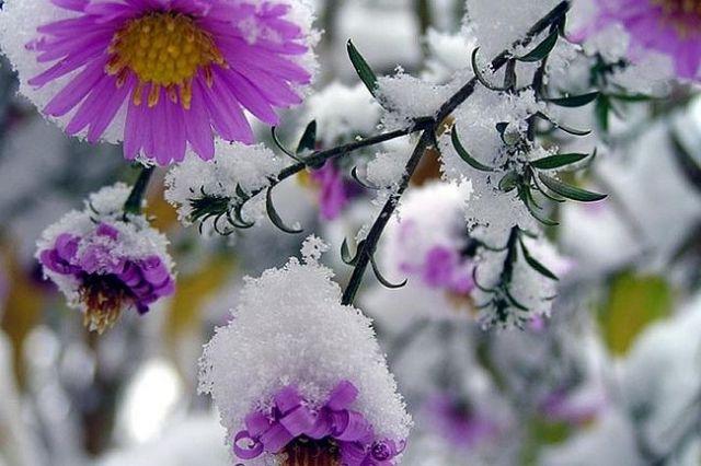 В России в одном из регионов в третий раз за лето выпал снег