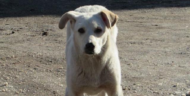 В Запорожье на женщину набросился и загрыз до смерти бездомный пес