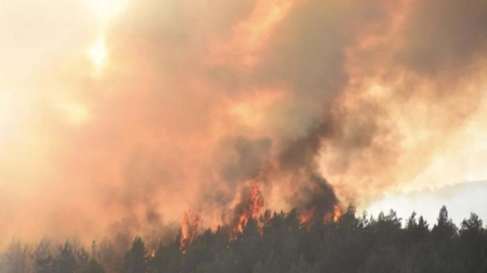 В Турции мощные пожары превратили леса в пепел