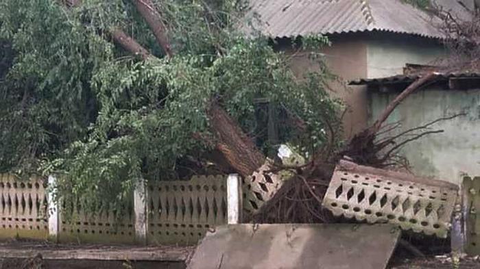 Срывал крыши и вырывал деревья: в Одесской области пронесся ураган – жуткие фото