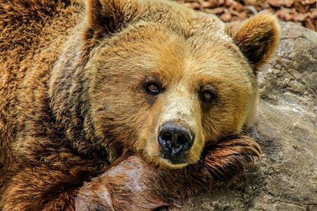 Названы причины массового отравления зверей в российском зоопарке