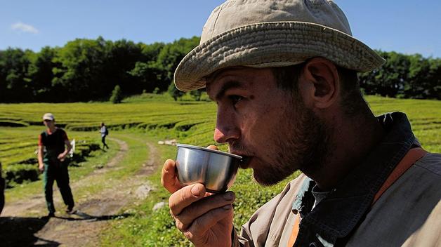 ФАС выступила против разбавления чая