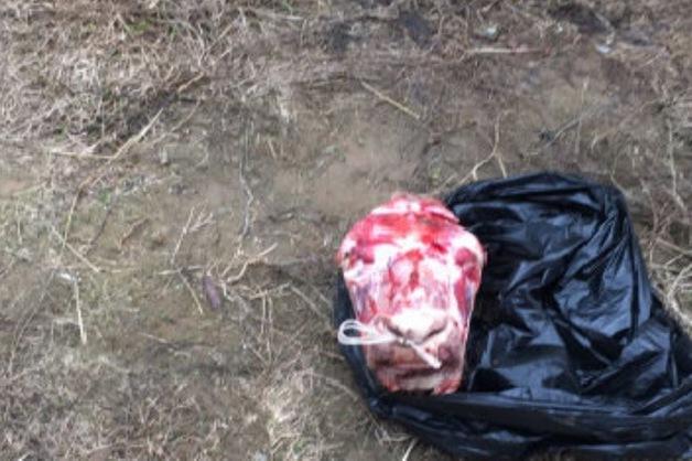 В Казани вымогатели попытались запугать адвоката отрубленной головой