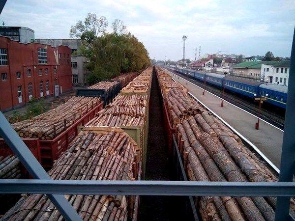 Дровишки Юрия Луценко. Что известно о контрабанде леса из Украины
