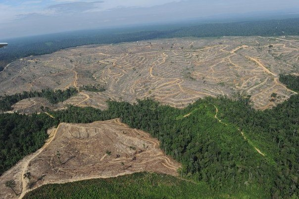 Об уничтожении лесов Сибири
