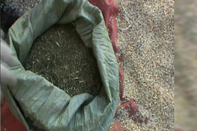 Задержание на Урале «КамАЗа» с марихуаной попало на видео