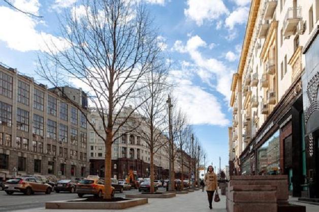 На Тверской улице посадили липовые липы