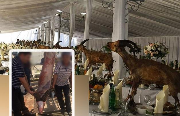 На свадебном застолье в Абхазии стол ломился от приготовленных краснокнижных животных