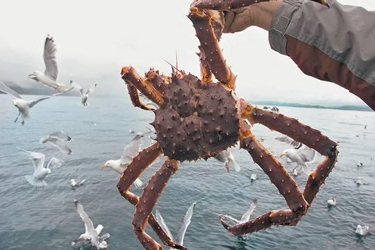Рыборейдерство